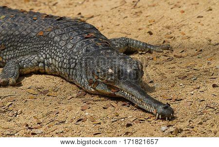 photo of a crocodile basking in the sunshine