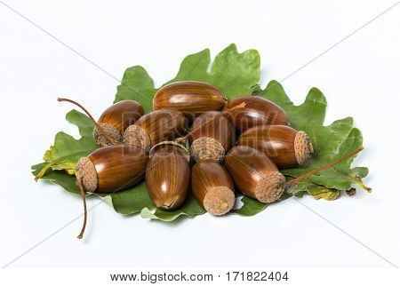 Acorns with leaves on white background. Autumn theme. Heap of acorns.