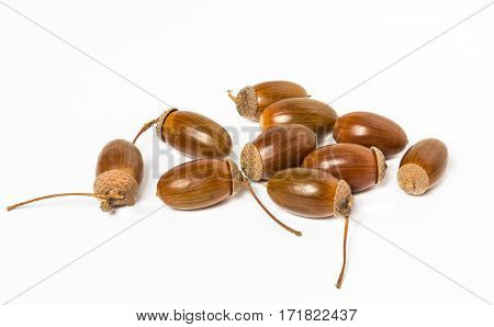 Dried acorns isolated on a white. Autumn theme. A pile of acorns close up.