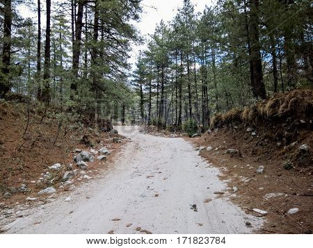 Dirt Road, In Pine Forest