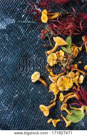 Forrest Chanterelle Mushrooms