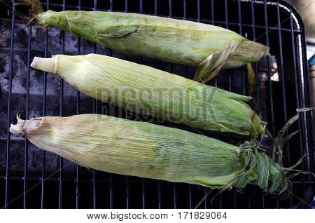 three corn cobs on BBQ grill with grill marks