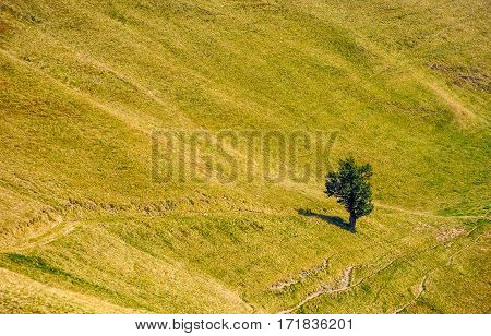 Few Trees On A Mountain Hill Side