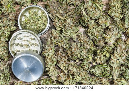 Open aluminum metal grinder with some grinded weed and dry cannabis buds background