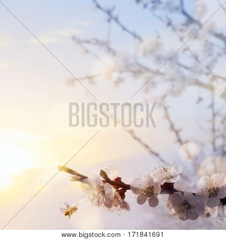 Spring flower background; Happy Easter and blooming tree