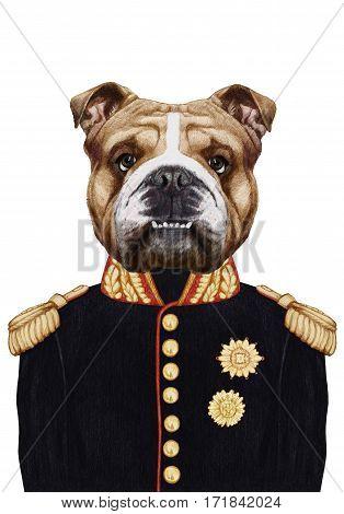 Portrait of English Bulldog in military uniform. Hand-drawn illustration, digitally colored.