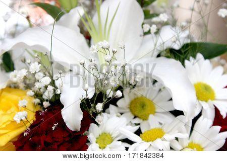 flower, nature, camomile, plant, white, green, chrysanthemum, detail
