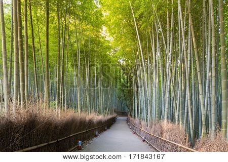 Walking pass to Bamboo Forest Arashiyama Kyoto Japan. Green bamboo fence background texture