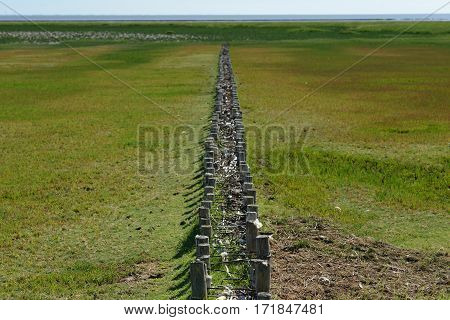 Image of grass landscape with wooden poles in coast Northern Germany.