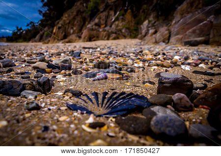 Various shells on beach near Hobart, Tasmania, Australia