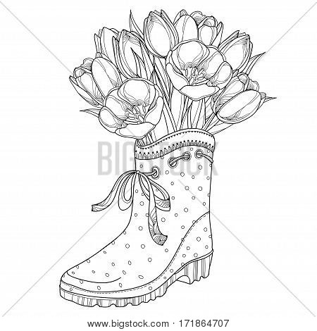 Vector bouquet with outline tulips flower in the rubber boot with bow isolated on white background. Ornate floral elements in contour style with tulip and gumboot for spring design or coloring book.