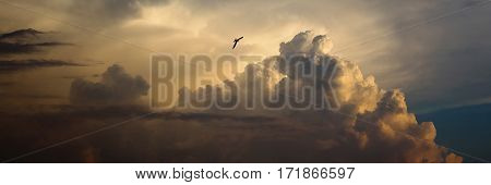 bird flying in the sky a large pearl cloud fluffy cloud like a mountain a swallow flying in the sky in the distance sunset light the day ends
