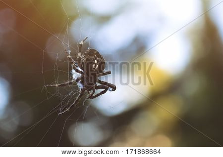 Detail shot of a spider with bokeh background