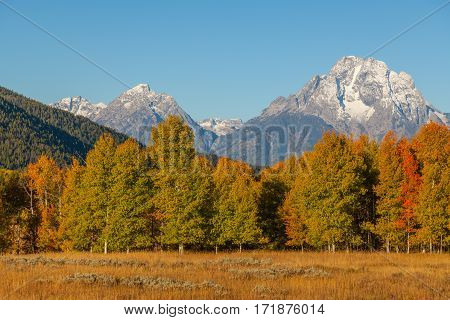 a beautiful autumn landscape in Teton National Park Wyoming