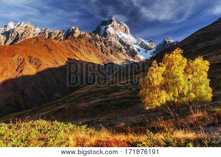 Autumn landscape and snowy mountain peaks. Birch forest in sunlight. Main Caucasian Ridge. Mountain View from Mount Ushba Mheyer, Georgia Europe