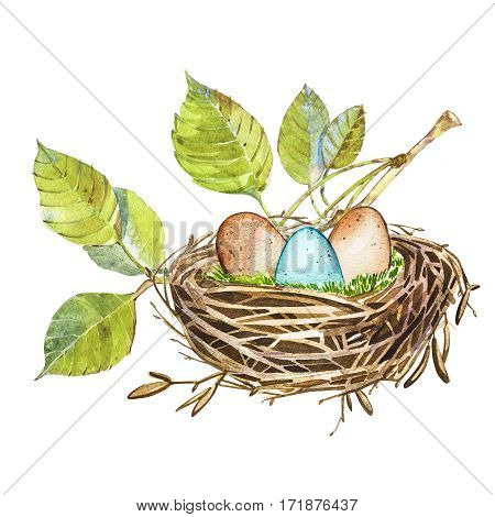 Hand drawn watercolor art bird nest with eggs , easter design. Isolated illustration on white.