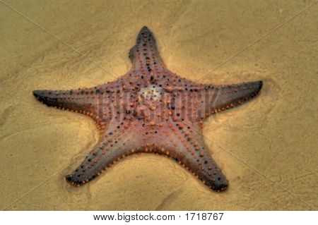 Starfish Hdr1