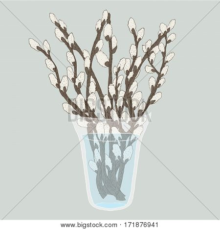 Pussy willow branches bouquet in a vase vector illustration