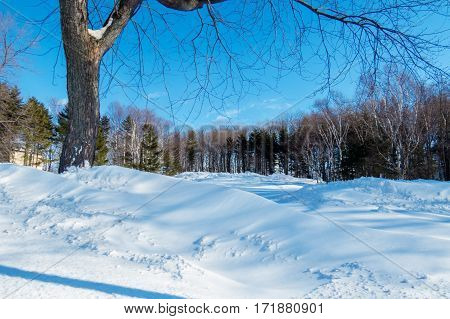 A large amount of snow in a little city field with a lot of natural trees in the background. Levis, Quebec, Canada.