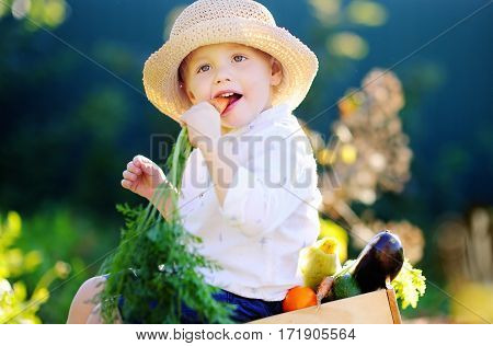 Little Boy Eating Organic Carrot Sitting On Wooden Crate