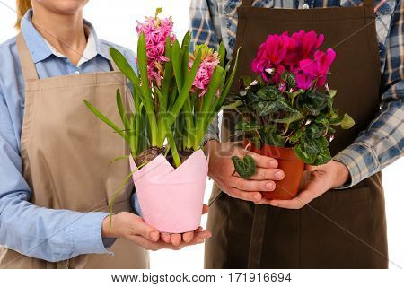 Two florists holding house plants, closeup