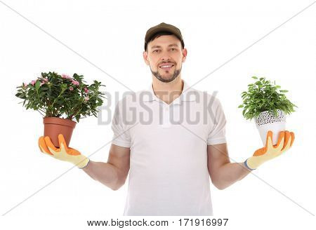 Male florist holding house plants isolated on white background