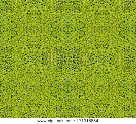 Gold Moss Sedum sedum de oro seamless pattern background