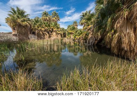 Oasis In The Desert Surrounded By Palm Trees
