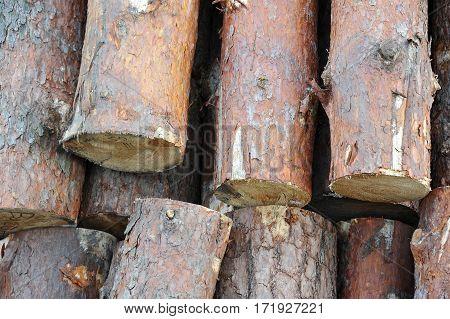 Pine Round Timber