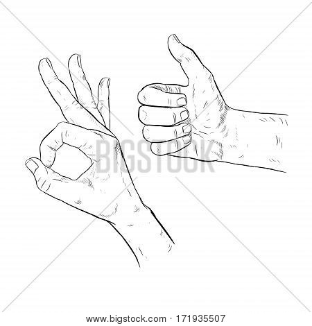 Drawn hand OK gesture. Thumbs up. Assent. Retro set of sketches isolated. Vintage style. Doodle linear graphic design. Black and white image. Vector illustration.