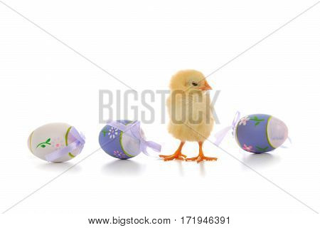 Fluffy Little Yellow Chicken And Easter Eggs On A White Background.