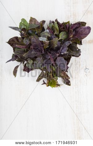 Fresh Purple Basil On A Light Wooden Background.