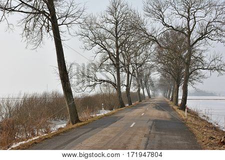 Asphalt road to village in North Lithuania. Rural winter landscape with alley of trees and asphalt road.