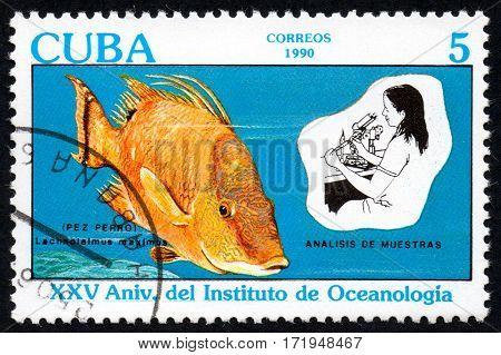 UKRAINE - CIRCA 2017: A stamp printed in Cuba shows the Lachnolaimus maximus Hogfish Analysis of samples circa 1990