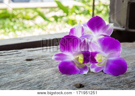 The beautiful Dendrobium orchid flower on table