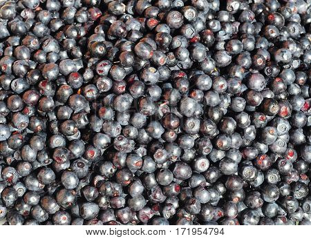 Bilberries, European blueberry Background. Vaccinium myrtillus is a species of shrub with edible fruit of blue color commonly called bilberry,  whortleberry, huckleberry, wineberry, dyeberry