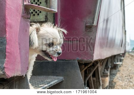 Dog So Cute Beige Color Travel By Train