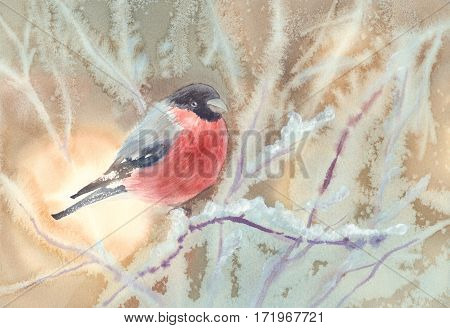 watercolor Christmas composition frosty tree branch, bullfinch red bird