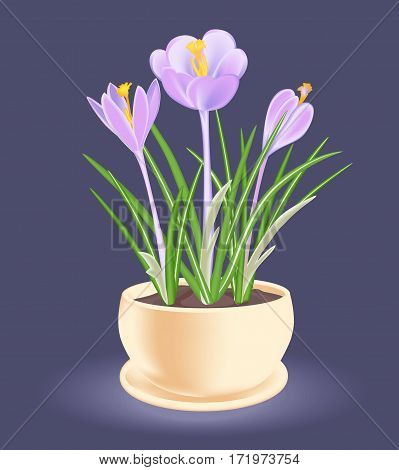 Spring flower in a flowerpot. Violet-blue crocus. Vector illustration