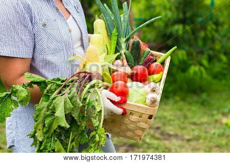 Close Up Woman Wearing Gloves With Fresh Vegetables In The Box In Her Hands.