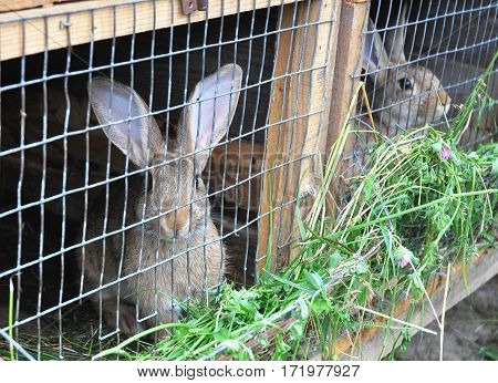 Rabbits eat green grass. Rabbit cage. Feeding Rabbits.