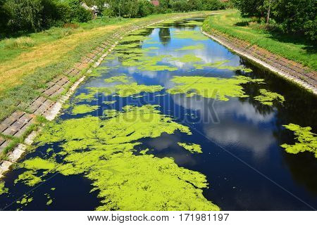 Beautiful river channel with duckweed in summer