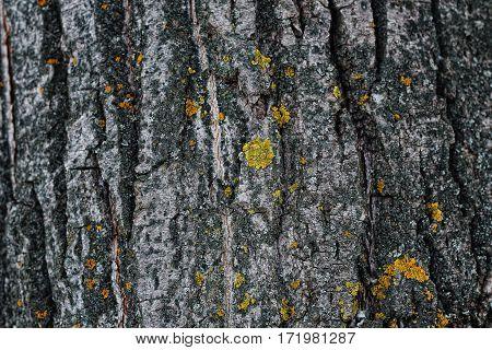 Dark texture of tree bark. Textured background