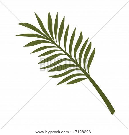 Fern leaf isolated on white background. Tropical plant fernleaf hedge bamboo branch realistic vector illustration. Pot plant widely used in home decor, big leaves used in flower bouquets composition