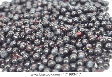 Vaccinium myrtillus is a species of shrub with edible fruit of blue color commonly called bilberry whortleberry huckleberry or European blueberry. Blueberry background.