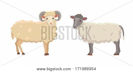 Vector set Cute Sheep and Ram isolated retro illustration. Standing Sheeps silhouette on white. Farm fanny milk young