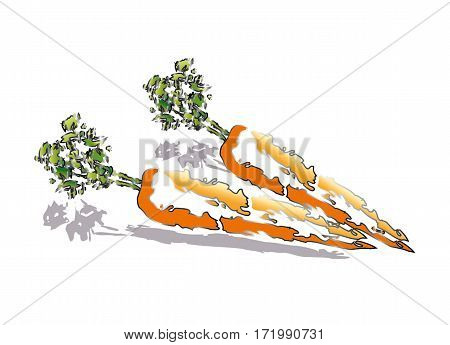 Abstract raw and fresh carrots on white background
