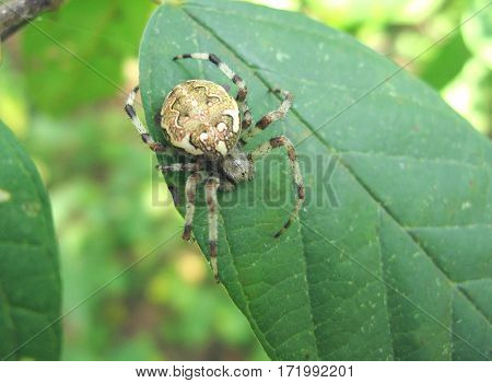colored spider sitting on a leaf closeup