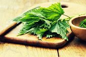 Medicinal plant-fresh stinging nettle on a cutting board poster