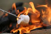 marshmallow on a stick being roasted over a camping fire poster